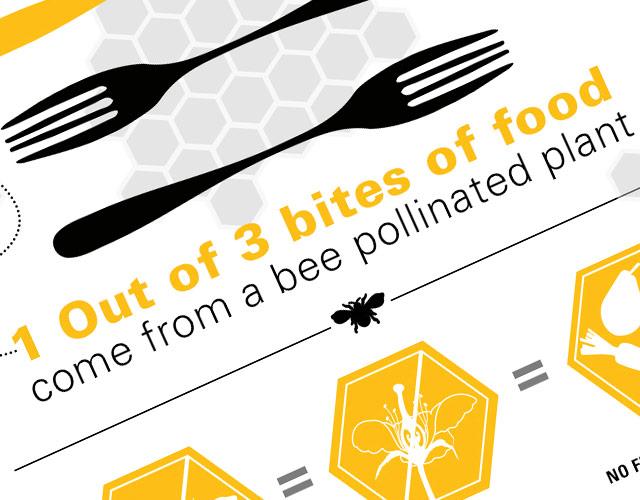 The Honey Bee Infographic
